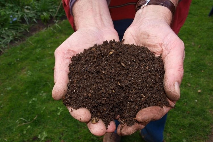 Home Composting Techniques